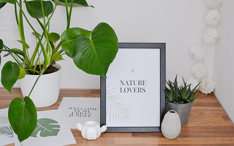 Plakaty Botaniczne Monstera Palma Urban Jungle Do Druku