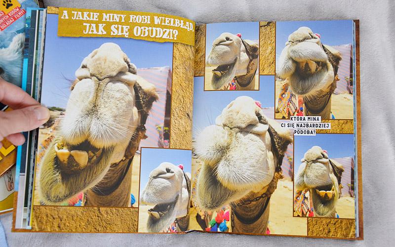 Czy tylko ja zawsze trafiam na najmniej przyjaznego wielbłąda?