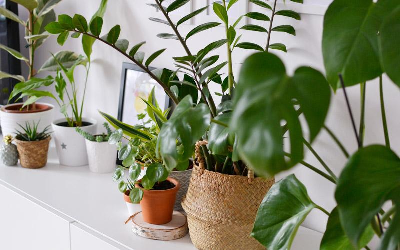 Rośliny doniczkowe - moja miejska dżungla