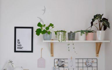 Rośliny doniczkowe mało wymagające