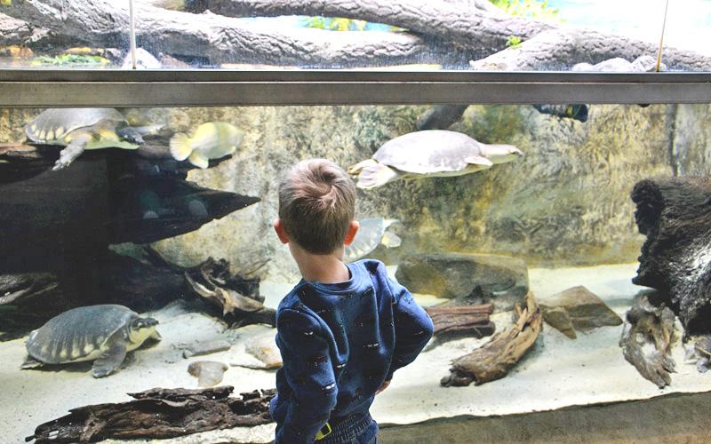 Zoo Ostrava - czy warto jechać