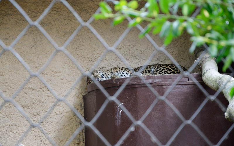 Zoo w Ostrawie - zwierzęta
