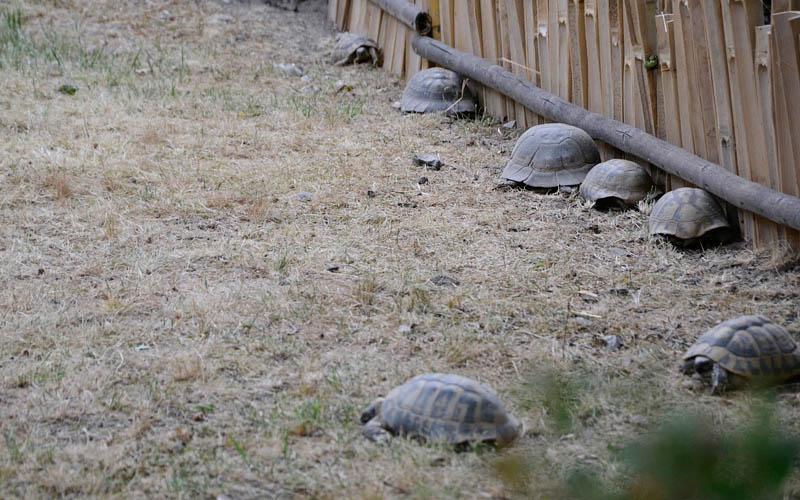 Zoo w Ostrawie - żółwie