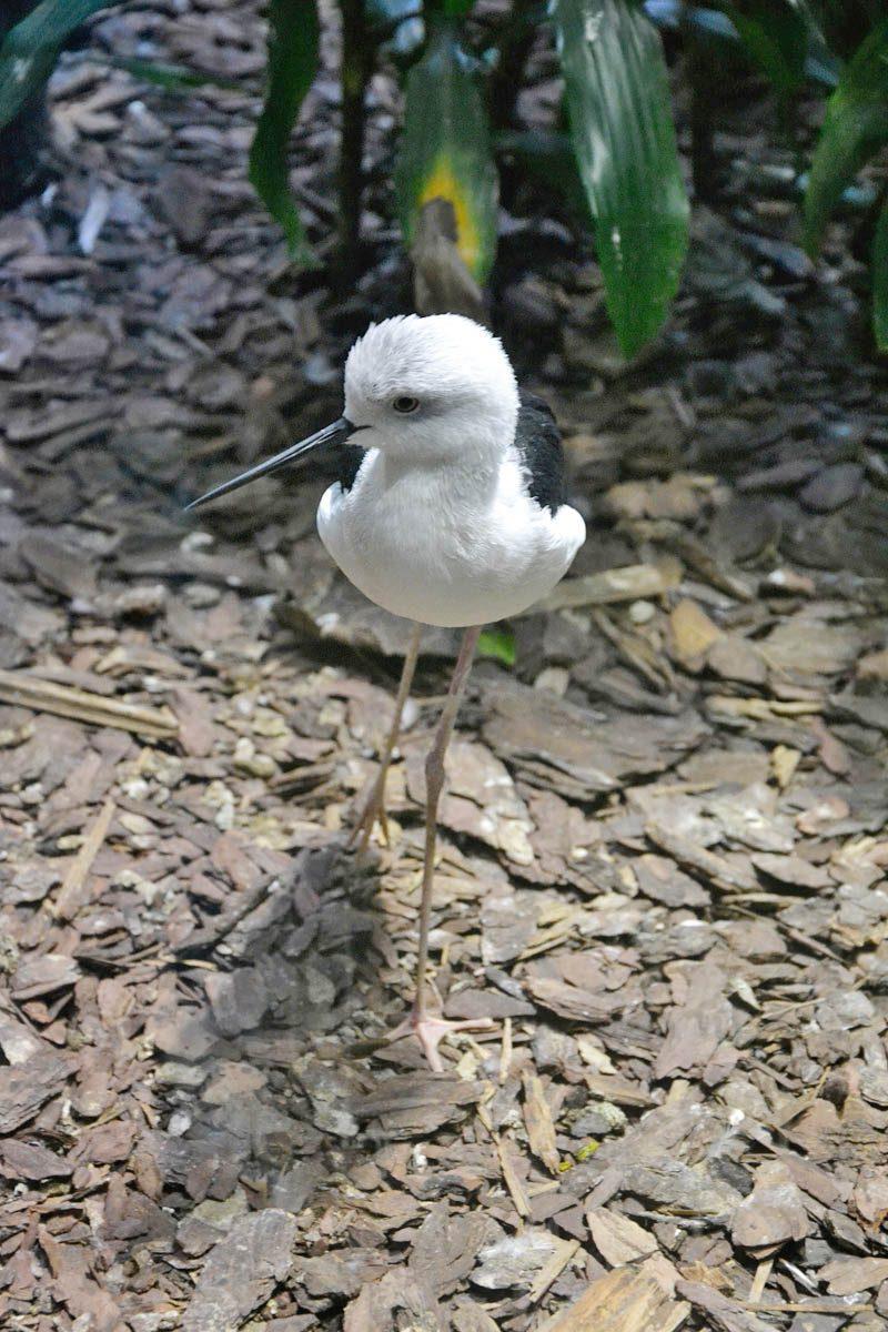 Zoo w Ostrawie - ptak