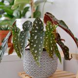 6 moich ulubionych roślin domowych