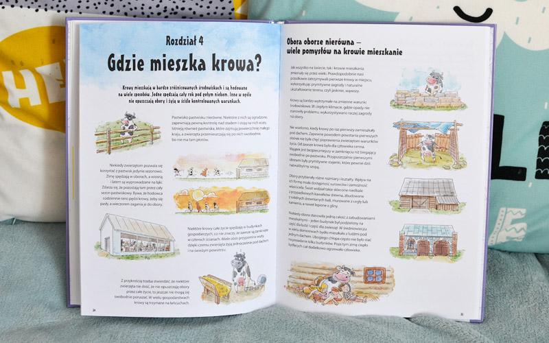 Wszystko o krowach - książka, zdjęcia, recenzja
