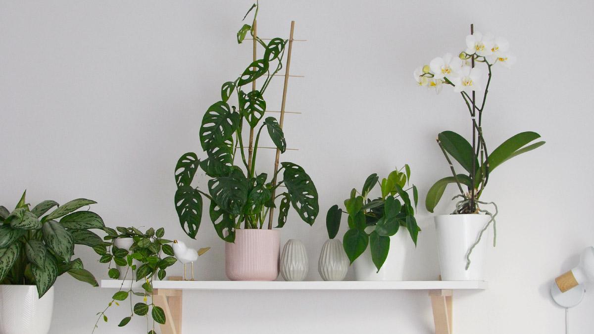 Jak kupować rośliny domowe?