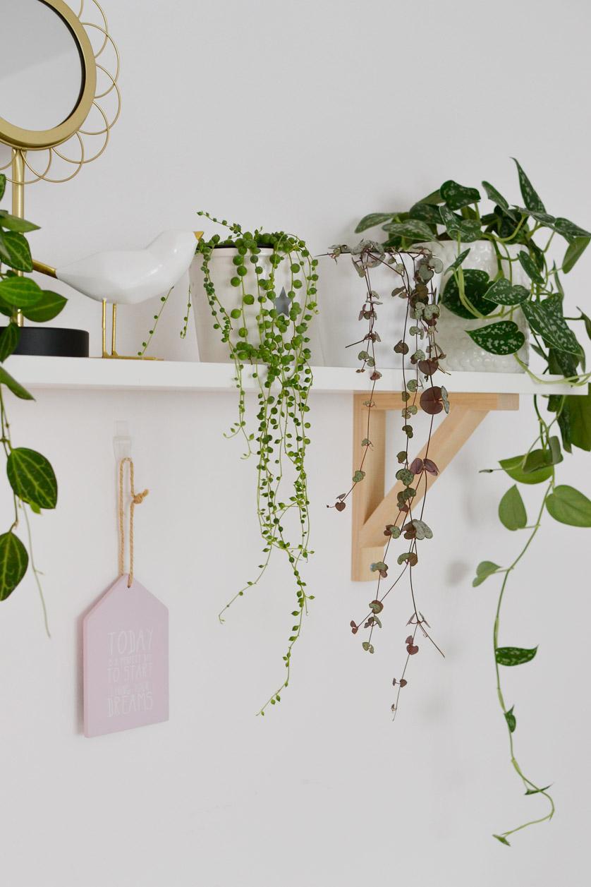 Rośliny doniczkowe zwisające w moim domu