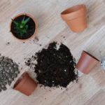 Jak przesadzać rośliny doniczkowe?