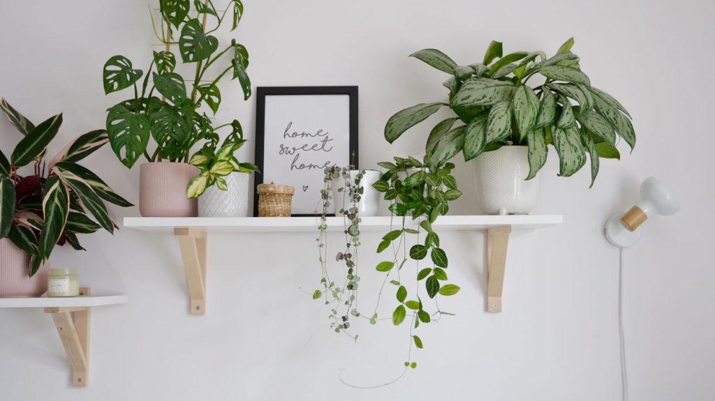 To idealne miejsce na rośliny
