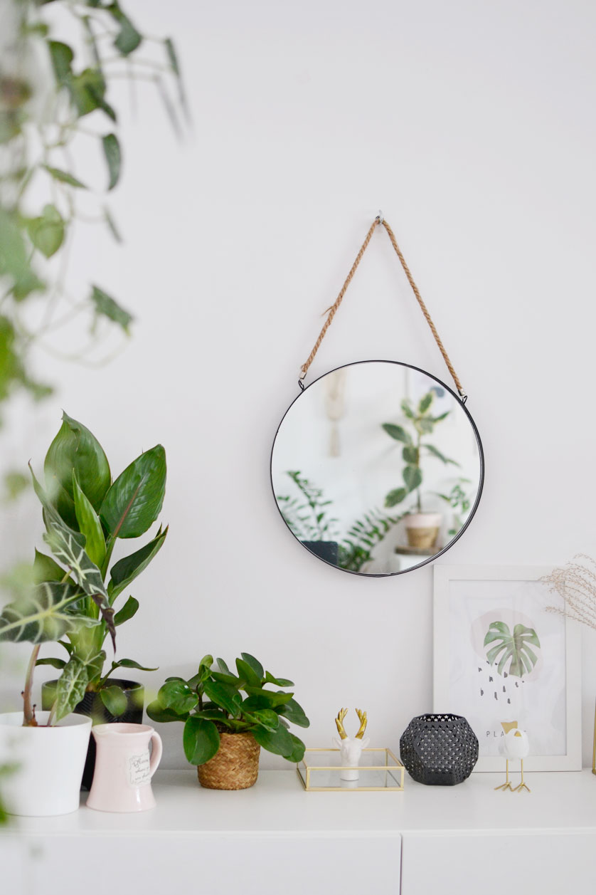 Jak dobrać doniczkę do rośliny?